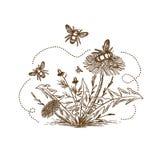 Пчела с чертежом цветков винтажным Стоковая Фотография RF