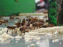 Пчела стоковое изображение