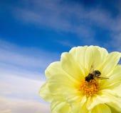 пчела Стоковое Изображение RF