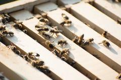 Пчелы внутри улья в поле Стоковые Фото