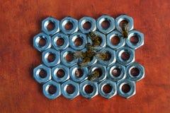 Пчелы и гайки шестиугольника Стоковое Изображение RF