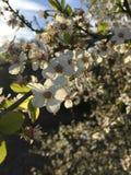 Пчелы и мед стоковое фото rf