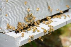 Пчелы летая вокруг их крапивницы Стоковые Фотографии RF