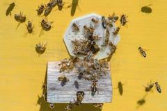 Пчелы летая к входу улья Стоковые Фотографии RF