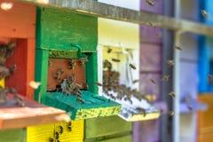 Пчелы летая к ульям в много цветов Стоковые Изображения