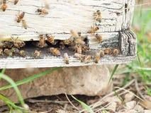 Пчелы летая на вход крапивницы конец вверх Стоковые Фото