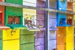 Пчелы летая перед красочным ульем Стоковое Изображение RF