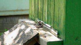 Пчелы на пасеке летают к крапивницам на доске прибытия, в саде зеленого цвета лета сток-видео