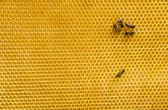 Пчелы на соте Стоковое Изображение RF