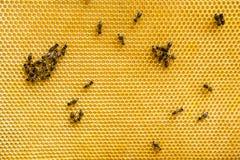 Пчелы на соте Стоковые Фото