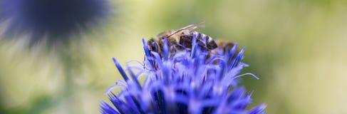 Пчелы на цветке Стоковые Изображения