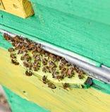 Пчелы около деревянного строба крапивницы Стоковое фото RF