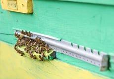 Пчелы приближают к входу крапивницы цвета Стоковое фото RF