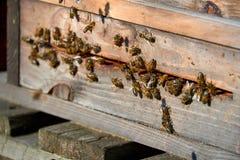 пчелы приезжают в улей Стоковые Фотографии RF