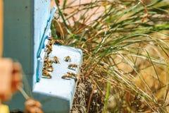 Пчелы, ульи и жатки меда в естественной пасеке сельской местности стоковое фото