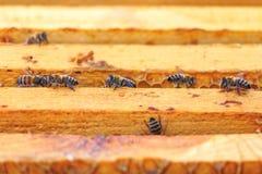 Пчелы, ульи и жатки меда в естественной пасеке сельской местности стоковые фотографии rf