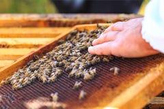 Пчелы, ульи и жатки меда в естественной пасеке сельской местности стоковое изображение