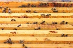 Пчелы, ульи и жатки меда в естественной пасеке сельской местности стоковая фотография