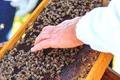 Пчелы, ульи и жатки меда в естественной пасеке сельской местности стоковая фотография rf