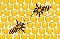пчелы Стоковые Фото