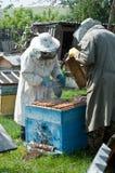 пчелы Стоковая Фотография RF