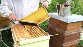 Пчелы Beekeeper чистя щеткой от сота сток-видео