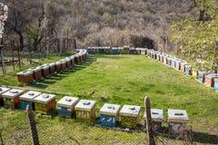 Пчел-сад установил в прямоугольник outdoors стоковое изображение