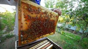 пчел-хранитель принимает из улья или пасеки рамка для пчел сток-видео