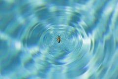 Пчела в бассейне Стоковое Изображение