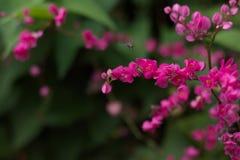 Пчела в цветках Стоковые Фото