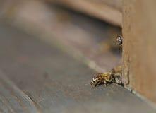 Пчела идет hive стоковая фотография