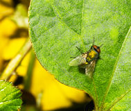 Пчела и листья Стоковое Изображение
