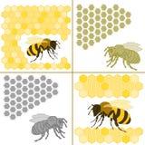 Пчела и сот Стоковые Изображения