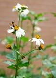 Пчела и цветки Стоковые Изображения RF