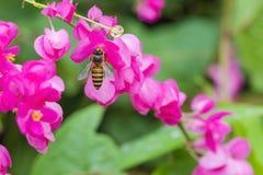 Пчела и цветок Стоковая Фотография RF