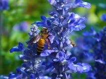 Пчела и цветок Стоковое Изображение
