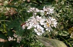 Пчела и цветок Стоковое Изображение RF