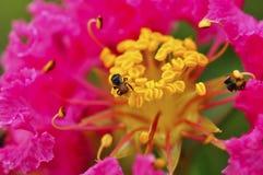 пчела малая Стоковое Фото