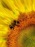 пчела многодельная Стоковое фото RF