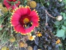 пчела многодельная Стоковое Изображение