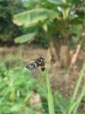 Пчела на листьях травы Стоковые Фото