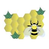 Пчела на клетках меда Стоковые Фотографии RF