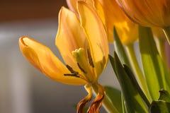 Пчела на своем пути вверх Стоковое Изображение RF
