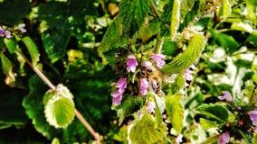 Пчела на цветках Стоковые Изображения RF