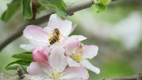 Пчела на цветке лета стоковое фото rf