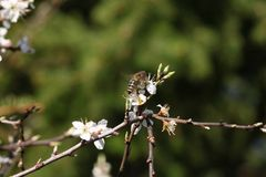 Пчела на цветке Стоковые Фотографии RF