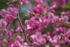 пчела немногая стоковые изображения rf