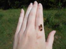 Пчела отдыхая в наличии Стоковое фото RF