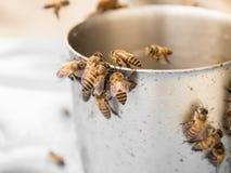 Пчела прикормом с сиропом Стоковая Фотография RF