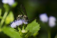 Пчела, пчела красивая стоковые изображения